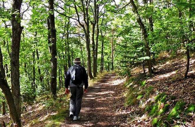 Randonnée en forêt dans le massif des Vosges