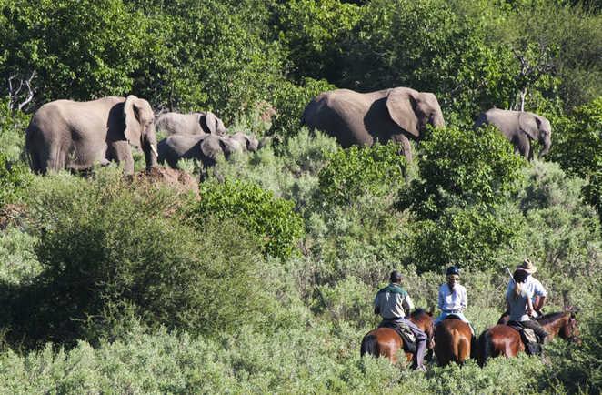 Randonnée et safari à cheval