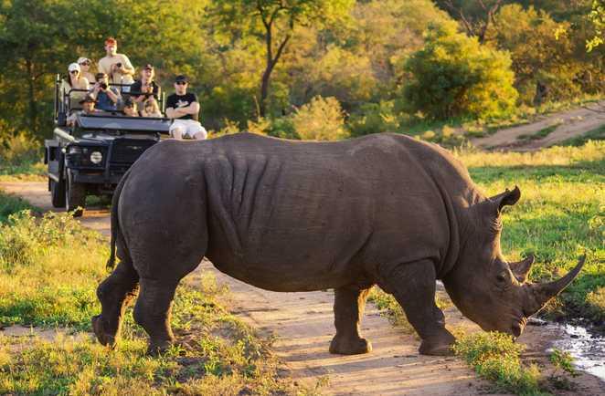 Rencontre de voyageurs en 4x4 avec un rhinocéros en safari en Afrique du Sud