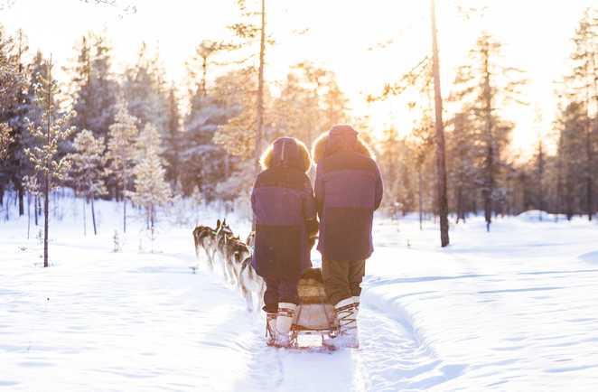 Raid chien de traîneau en Laponie