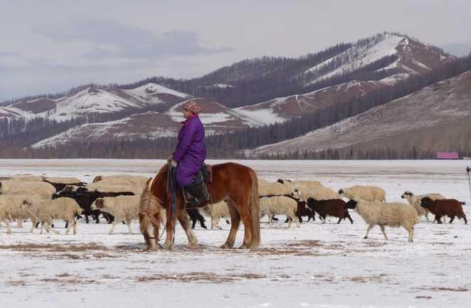 Transhumance avec les nomades mongoles