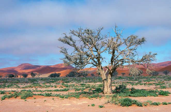 Vers les dunes rouge d Sossusvlei dans le désert du Namib en Namibie