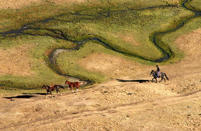Vue sur un cavalier suivant des chevaux sauvages au milieu des plaines en Kirghizie
