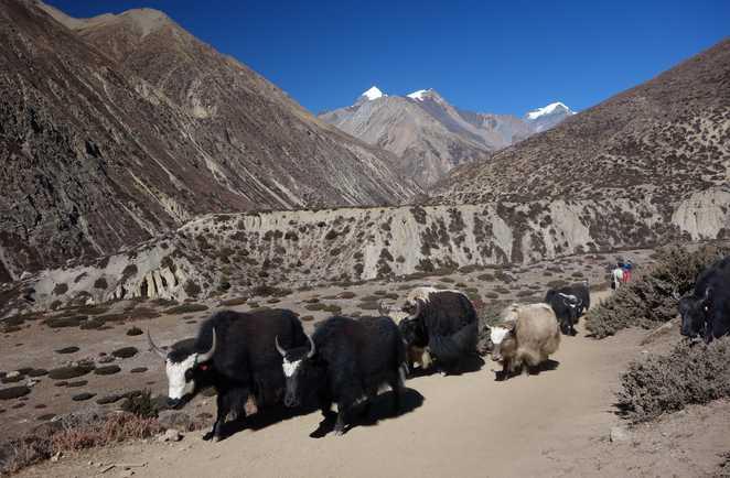 Tour_Annapurnas