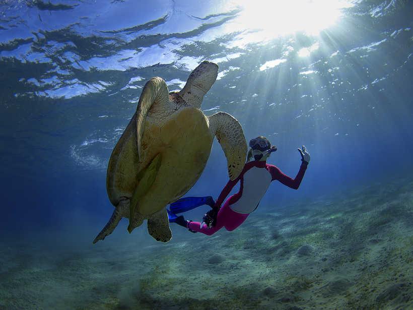 Rencontre avec une tortue verte en snorkeling