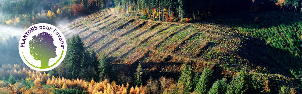 Projet de reforestation avec Plantons pour l'avenir