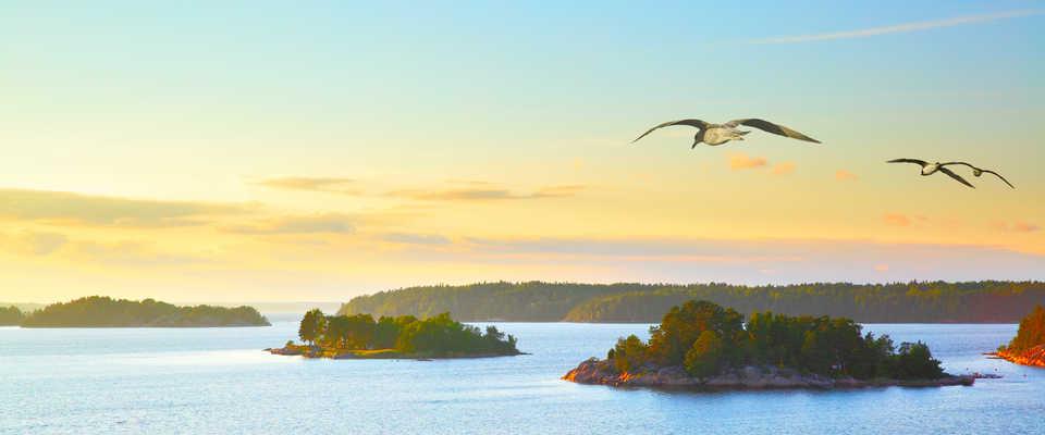 Mouettes volant au-dessus des îles de l'archipel de Stockholm
