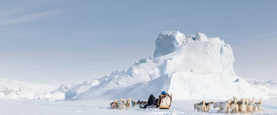 Voyage chien de traîneau au Groenland